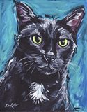 Cat Black Cat Expressive