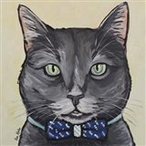 Cat Smokey Gray Tabby