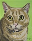 Cat Tabby Wrigley
