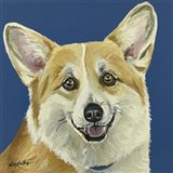 Corgi On Blue