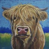 Cow Fergus Scottish Higland Cow