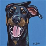 Doberman On Blue
