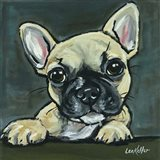 Frenchie Pup 1