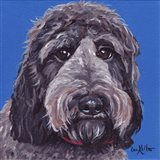 Labradoodle Black On Blue