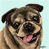 Pug On Turquoise