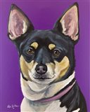 Rat Terrier On Purple