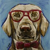 Yellow Lab With Glasses
