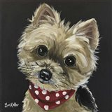 Yorkie Red Bandana Photo
