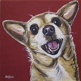 Chihuahua Happy