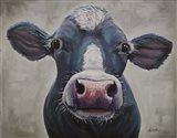 Cow Clara Belle