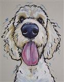 Goldendoodle Murphy
