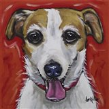 Jack Russell Ginny