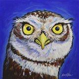 Owl Midnight