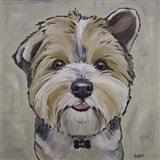 Terrier Bucky