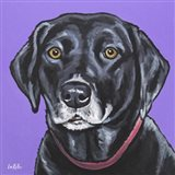 Black Lab Fifi
