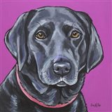 Black Lab On Pink
