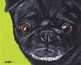 Black Pug On Green