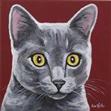 Gray Cat Oliver