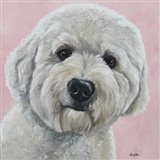 Labradoodle Hank On Pink