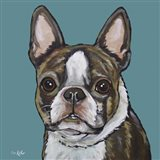 Sasha Boston Terrier On Teal