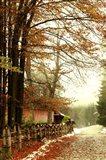 Street Of Seasons