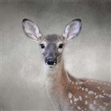 Little Miss Lashes White Tailed Fawn
