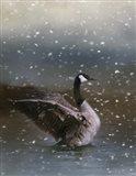 Snowy Swim