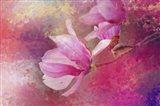 Pink Tulip Magnolia