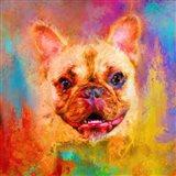 Jazzy French Bulldog