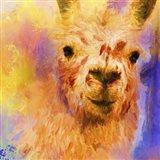 Jazzy Llama