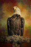 The Bald Eagle In Autumn