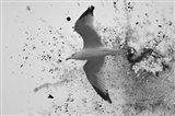 A Splash Of Gull
