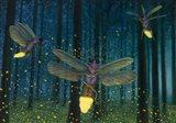 Night Light Flight