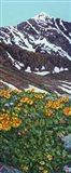 Torrey's Peak in Spring