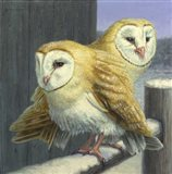 Barn Owl Couple