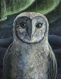Barn Owl II