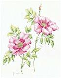 2007 Wild Roses