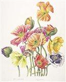 2010 Poppy Bouquet