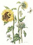 October Sunflower
