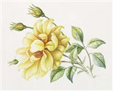 Yellow Rose 10