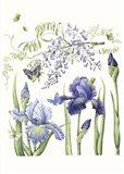 Iris & Wisteria