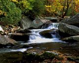 Little River Elkmont #2