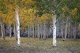 Dixie Forest, UT
