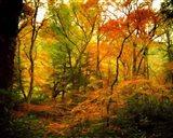 Chimneys Trail GSMNP, TN