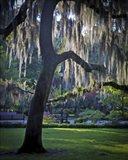 Forsyth Pk, Savannah