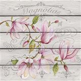Pink Magnolias I