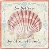 Sea Shells  -  A