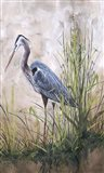 In The Reeds - Blue Heron - B