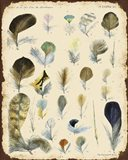 Vintage Feather Study - C