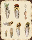 Vintage Feather Study - D